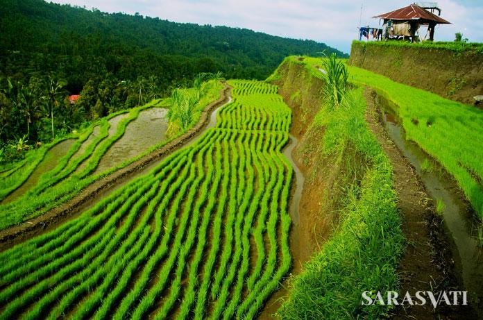 Sumber Foto: balilovinatours.com